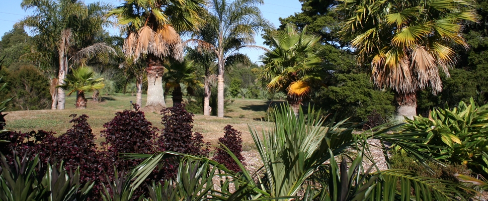 Palm Garden at the Auckland Botanic Gardens