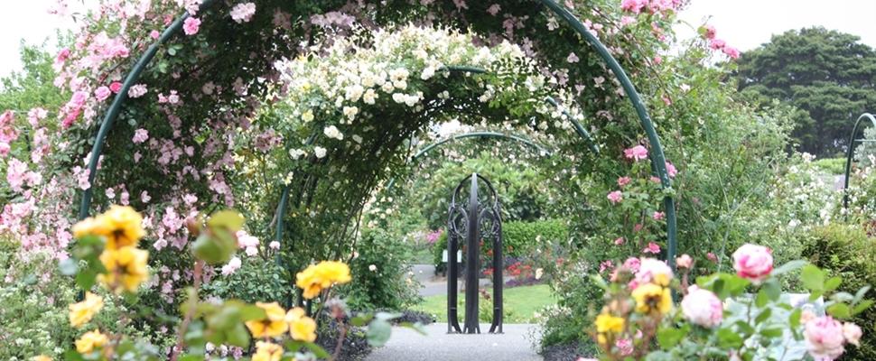 rose garden - Pictures Of Rose Gardens