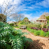 The Herb Garden at the Auckland Botanic Gardens
