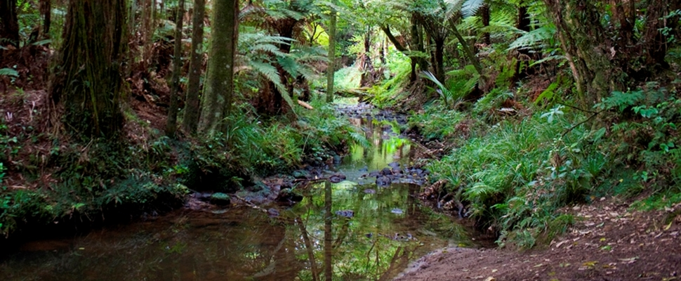 Puhinui Stream runs through our native forest