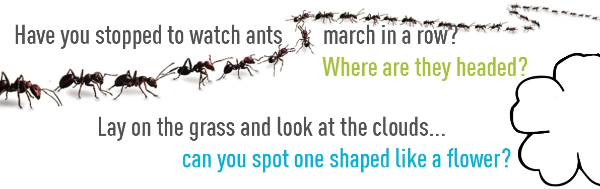 Have you stopped to watch ants march in a row?... where are they headed? When was the last time you lay on the grass to look at the clouds? Can you find one shaped like a flower?