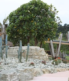 Through the dry desert to reach the misty jungle, Potter Children's Garden