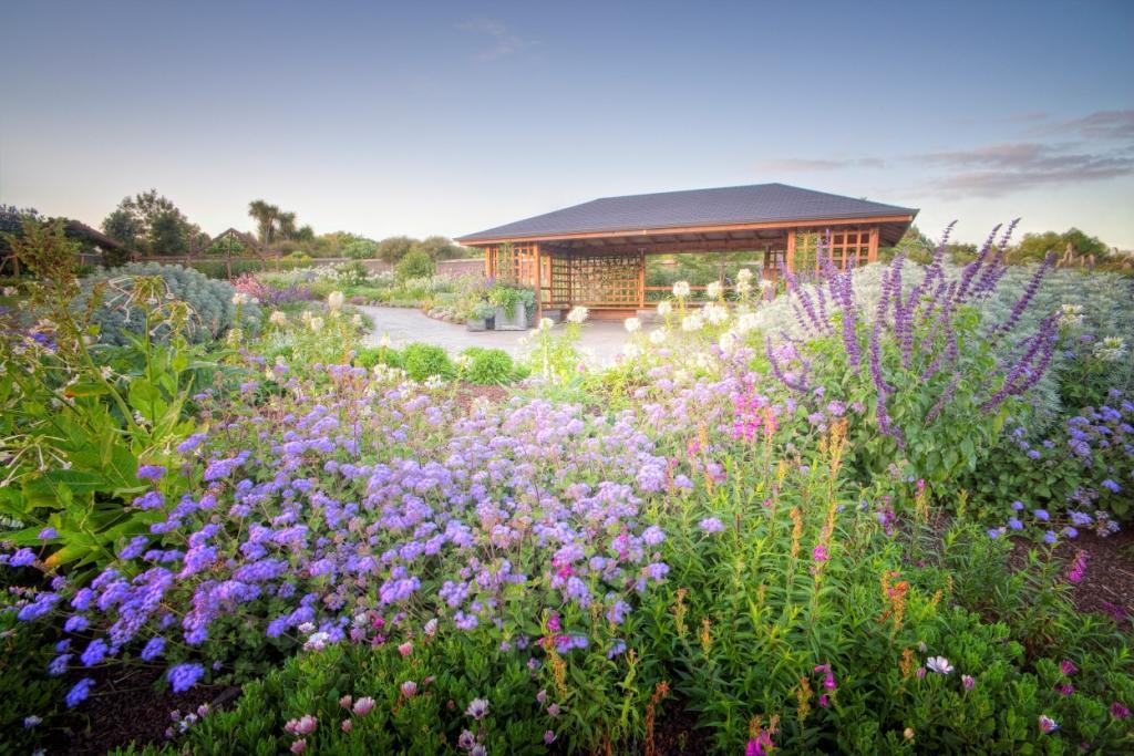 perennial garden  auckland botanic gardens, Beautiful flower
