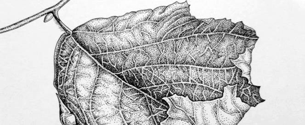 Leaf - stippling art by Jenny Haslimeier