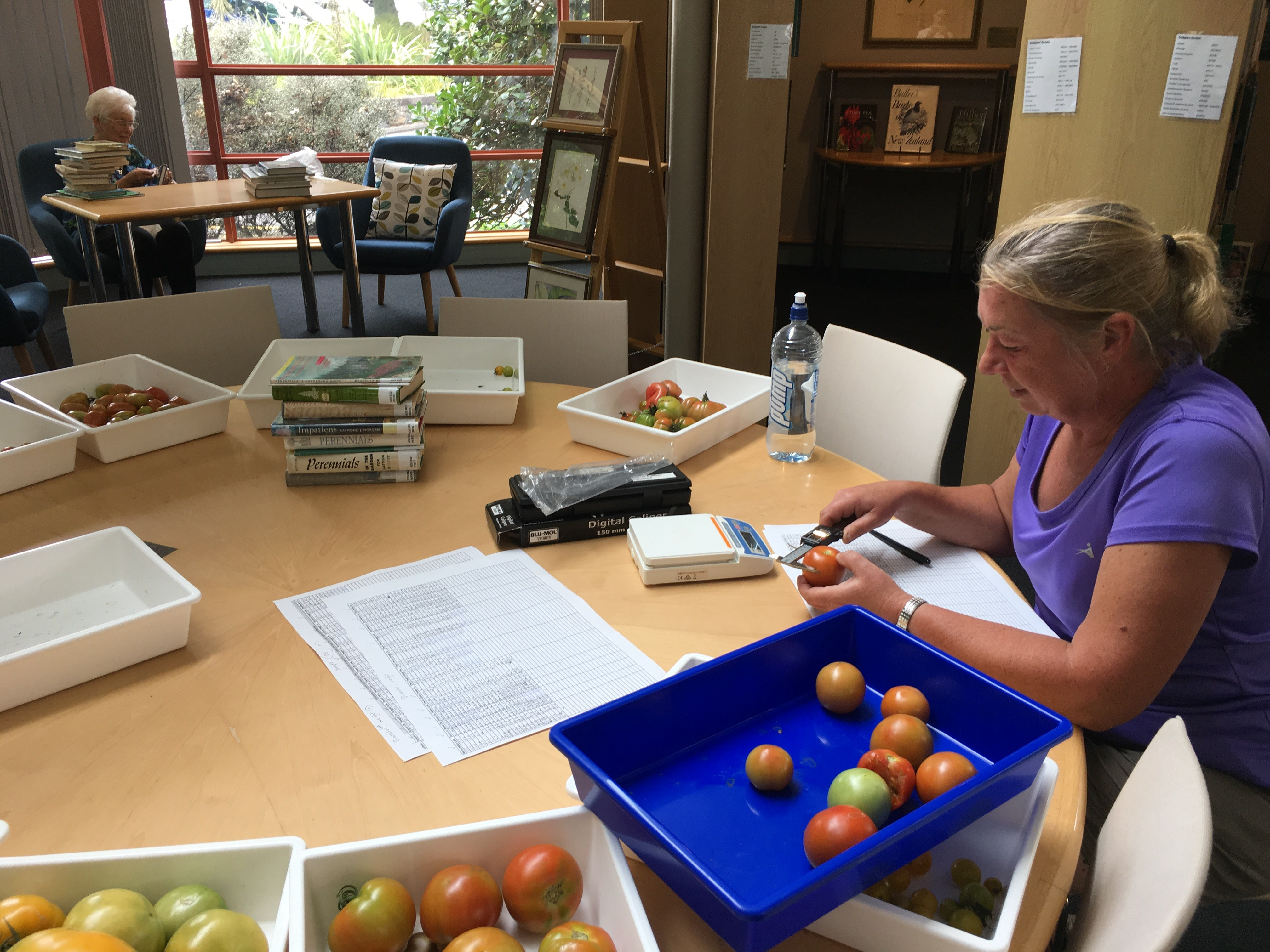 MIT student, Julie, measuring tomatoes