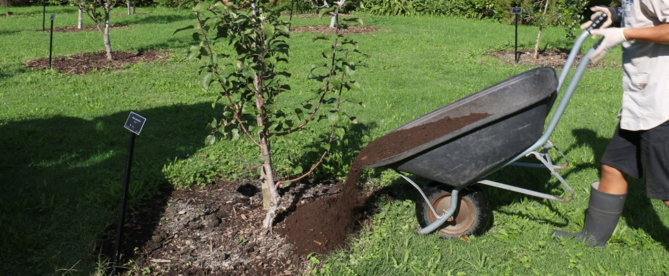 Composting the orchard