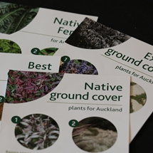 Ground covers image