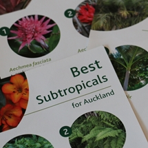 Subtropicals image