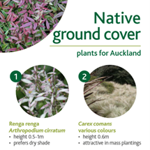 Native ground cover image