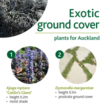 Exotic ground cover image