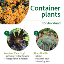 Container plants image
