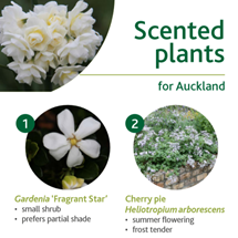 Scented plants image