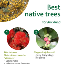 Native trees image