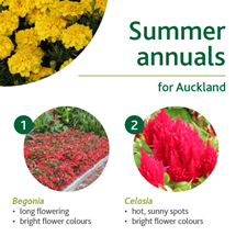 Summer annuals image