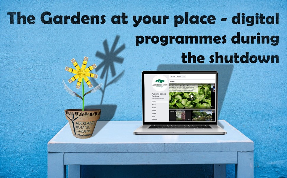the gardens at your place 3.jpg