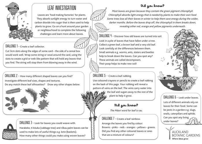 Leaf investigation sheet