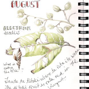Nature journaling in the vege garden for beginners image